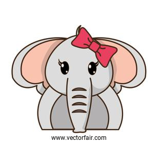 adorable female elephant cute animal