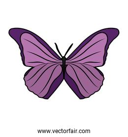 beauty butterfly style animal to the spring