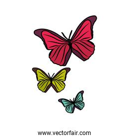 beauty nature butterflys animal flying