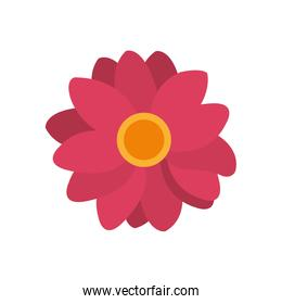 colorful nice flowers with petals decoration design