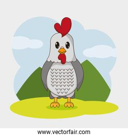 Chicken cartoon design