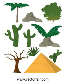 Desert plants and and elements