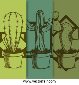 Cactus on pot hand drawing