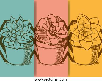 Succulent in pot hand drawing