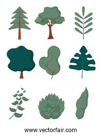 Tree and leaves collection