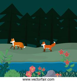 Foxes at forest cartoon