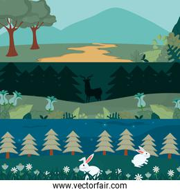 Animals and forest cartoon