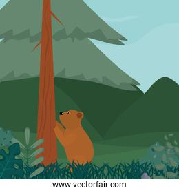 Cute bear at forest
