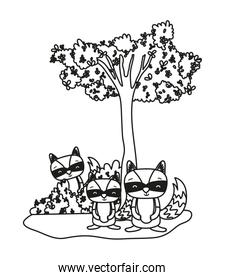 outline adorable raccoon friends animal and bushes
