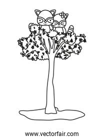outline adorable raccoon couple animals in the tree