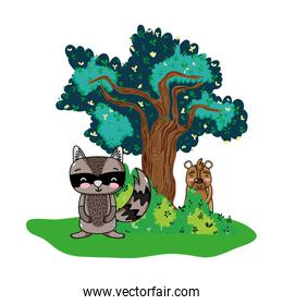 raccoon and bear animals with tree and bushes