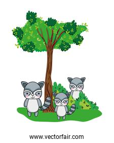 raccoon friends animals with bushes and tree