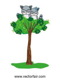 adorable raccoon couple animals in the tree