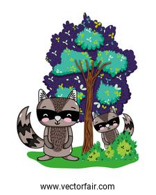 raccoons friends animals with bushes and tree