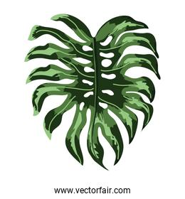 Leaves plant isolated