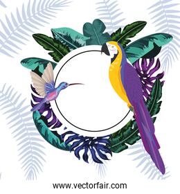 Exotic and tropical birds frame
