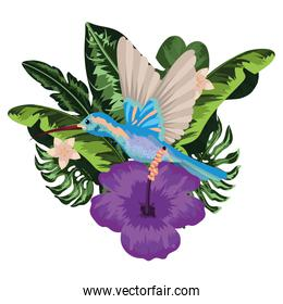 Exotic and tropical bird