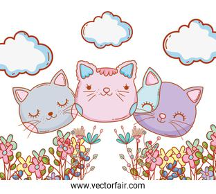 kitty cats faces cartoon