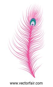 feather icon isolated