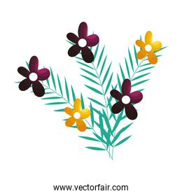 Isolated flowers ornament design vector illustration