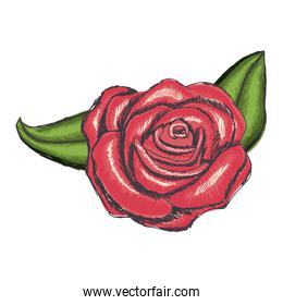 delicate flower drawing icon image