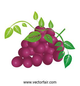 grapes bunch icon image