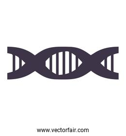 Chain of DNA with information genetic