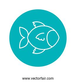 Circle shape with fish animal