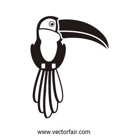 silhouette of toucan with beak and feathers