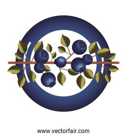 dish with blueberry branch and leafs