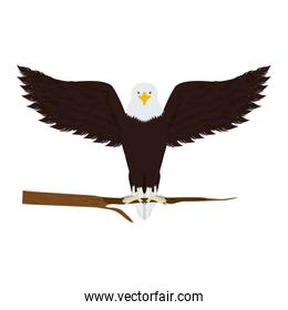 eagle on a tree branch