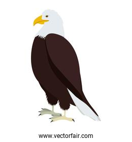 silhouette eagle in standing position
