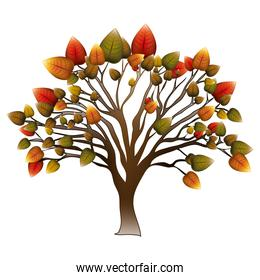 tree with colorful leafy branches