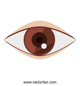 eye and look concept