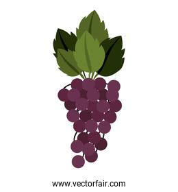 silhouette colorful of bunch grapes with stem and leafs