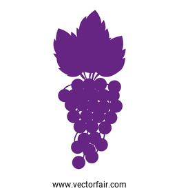 silhouette purple color with bunch of grapes