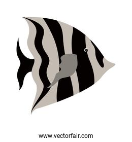 colorful silhouette with sea fish to striped