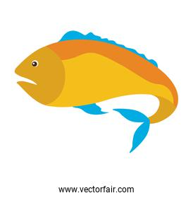 colorful silhouette with sea fish yellow and fins blue