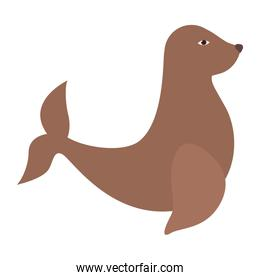 seal animal icon