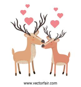 cute couple deers with hearts