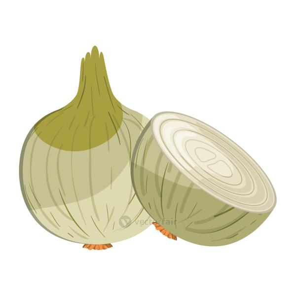 cute onion isolated icon