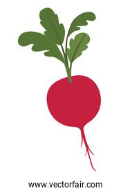 cute beet isolated icon
