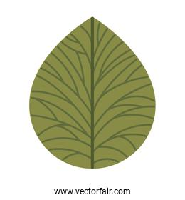 beautiful leafs isolated icon