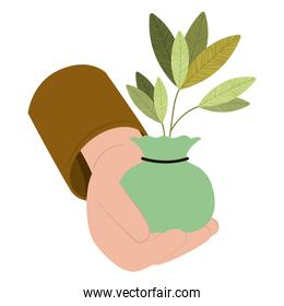 plant in hand isolated icon