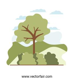 tree plant with landscape isolated icon