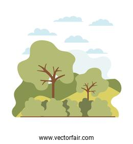 trees plant with landscape isolated icon
