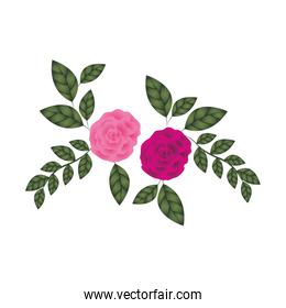 beautiful roses with leafs isolated icon