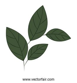 branch with leaves isolated icon