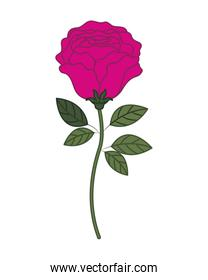 beautiful rose with leafs isolated icon