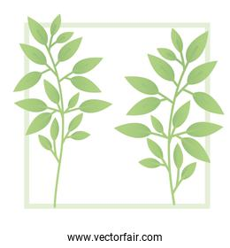 branch and leaf with frame isolated icon